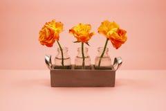 在一个玻璃瓶的三朵玫瑰在桃红色背景 免版税库存照片