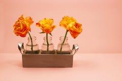 在一个玻璃瓶的三朵玫瑰在桃红色背景 图库摄影