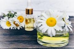 在一个玻璃瓶的春黄菊精油有吸移管的在桌上在春黄菊花附近 免版税图库摄影