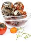 在一个玻璃碗的发霉的蕃茄在白色背景 不健康的食物 菜坏存贮  在食物的模子 图库摄影
