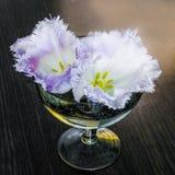 在一个玻璃花瓶的特里郁金香 库存照片