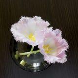 在一个玻璃花瓶的特里郁金香 库存图片