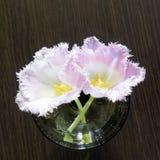 在一个玻璃花瓶的特里郁金香 免版税库存图片