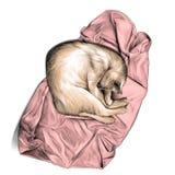 在一个球和睡觉卷起的猫在毛巾或一揽子顶视图 库存照片