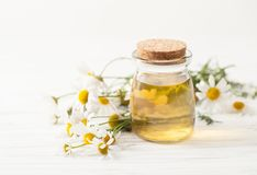 在一个瓶子的汤有春黄菊的在一张白色桌上开花 图库摄影