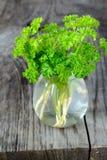 在一个瓶子的绿色卷曲荷兰芹用水 库存图片