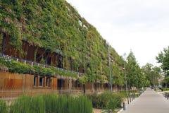 在一个生态大厦的绿色墙壁 免版税库存图片