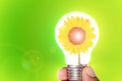 在一个电灯泡的向日葵 免版税库存照片