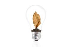在一个电灯泡的干燥棕色叶子 库存图片