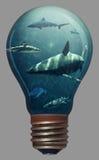在一个电灯泡的鲨鱼 库存照片