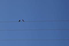 在一个电电汇的二只鸟 免版税库存图片