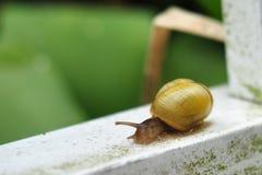 在一个白合金酒吧的蜗牛 免版税库存照片