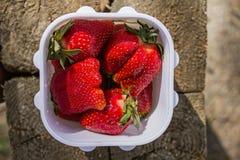 在一个白色塑料方形的容器的水多的成熟红色巨大的开胃草莓莓果在木纹理背景在夏天 免版税图库摄影