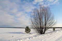 在一个白色多雪的领域的一棵唯一树 冬天 库存照片