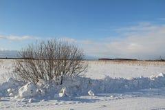 在一个白色多雪的领域的一棵唯一树 冬天 免版税图库摄影