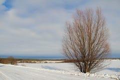 在一个白色多雪的领域的一棵唯一树 冬天 库存图片