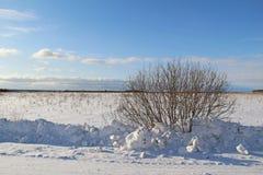 在一个白色多雪的领域的一棵唯一树 冬天 图库摄影