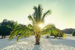在一个白色天堂沙子海滩的好的小棕榈树 库存照片
