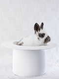在一个白色帽子的白色兔子 库存照片