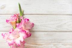 在一个白色木板的桃红色剑兰 复制空间 免版税图库摄影