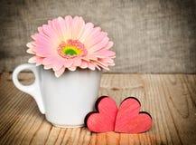 在一个白色杯子的大丁草花有红色华伦泰的 库存图片