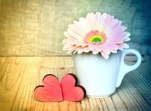 在一个白色杯子的大丁草花有红色华伦泰的 库存照片