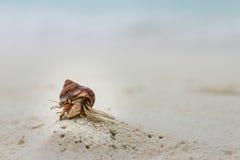 在一个白色沙子海滩的一只小的寄居蟹在马尔代夫 免版税图库摄影