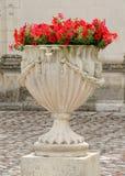 在一个白色石花瓶的红色喇叭花 图库摄影