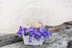 在一个白色篮子的小米黄复活节彩蛋与紫罗兰 库存照片