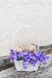 在一个白色篮子的小米黄复活节彩蛋与紫罗兰 免版税库存图片