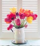 在一个白色罐子花瓶的明亮和快乐的郁金香花束在与被绘的木快门和ro的通风自然窗口后面光沐浴了 图库摄影