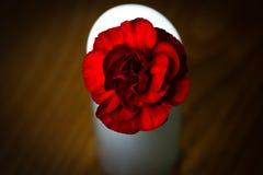 在一个白色花瓶的一朵唯一红色玫瑰在一张木桌上 免版税库存图片