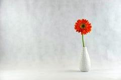 在花瓶的大丁草雏菊 免版税库存照片