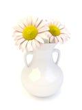 在一个白色porcelyn花瓶的雏菊花 库存图片
