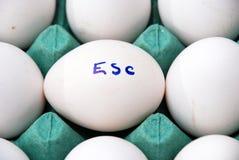 在一个白鸡蛋的文本ESC 免版税库存照片