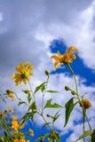 在一个盛开的向日葵 免版税库存图片