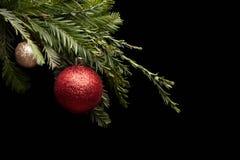 在一个真正的杉木分支的红色圣诞节球 免版税库存图片