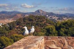 在一个石墙上的两只鸥有后面的马拉加市的,西班牙 免版税图库摄影