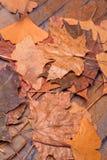 在一个石墙上的叶子 图库摄影