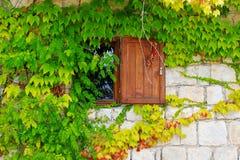 在一个石墙上的绿色常春藤有一老视窗的,美好的背景 免版税库存照片