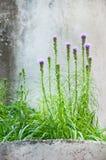 在一个石墙前面的多种花色鲜明之植物 库存图片