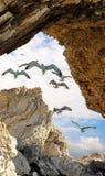 在一个石框架的海鸥 库存照片