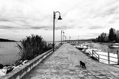 在一个码头的一只猫在Trasimeno湖翁布里亚,有一些靠码头的小船的和在阴暗天空下 免版税库存照片