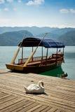 在一个码头的天鹅在布莱德湖 免版税库存图片