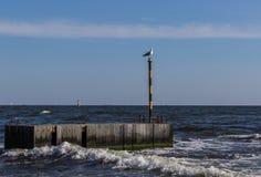 在一个码头的海鸥在海的背景 免版税库存照片