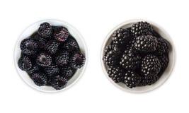 在一个碗的黑莓有文本的拷贝空间的 在白色隔绝的成熟和鲜美黑莓果 免版税库存图片