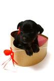 在一个礼物盒的逗人喜爱的黑小狗以心脏的形式 免版税库存照片