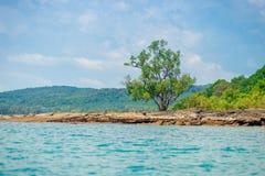 在一个离开的多岩石的海滩的一棵小树一热带无人居住 免版税库存照片