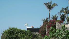 在一个私有别墅水池边缘的白色独角兽 股票视频