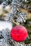 在一个积雪的树枝的红色圣诞节球 免版税库存照片